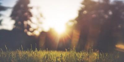 jake-givens-sunshine-grass